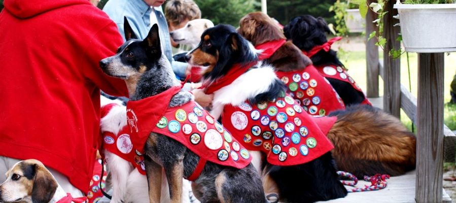 Dog Scouts Rock!