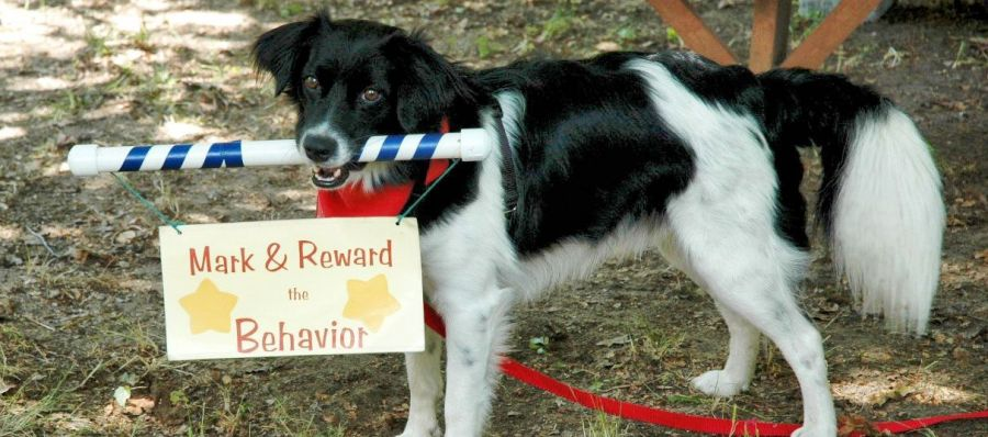 Reward-based Training